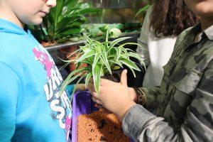 Kind hält behutsam die Pflanze - © Projektteam GRÜNEzukunftSCHULEN
