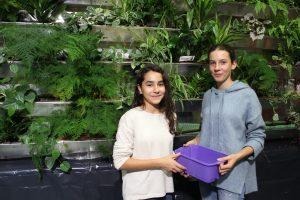 Jugendliche helfen beim Bepflanzen der grünen Wand - © Projektteam GRÜNEzukunftSCHULEN